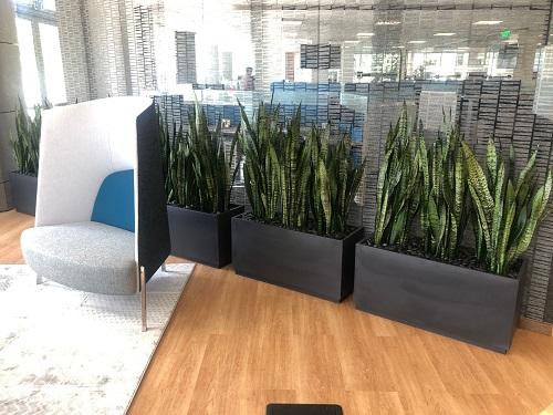 Gyvi augalai biure